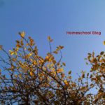 Hübscher Herbst – Autumn is Beautiful