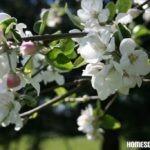 Der Frühling – Blüten und Wiesenblumen