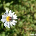 Naturbeobachtungen im Frühling
