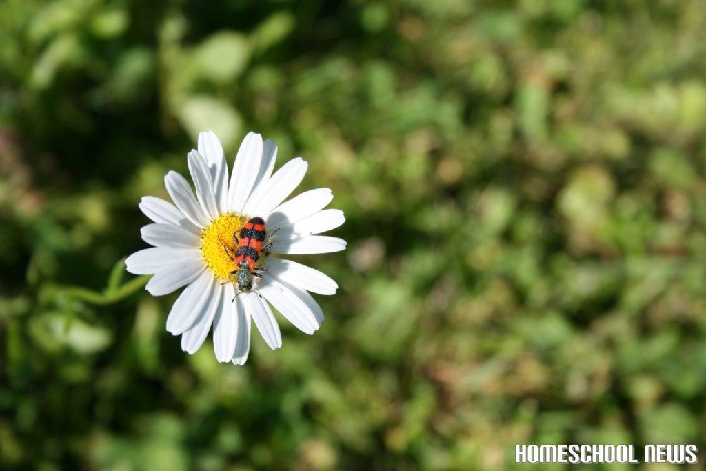 Wiesenblumen, Homeschool News, Jan und Bernice Zieba