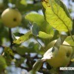 Naturbeobachtungen im Juli