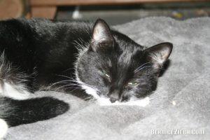 Unsere Katze, Bernice Zieba, Homeschool News