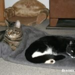 Von Katzen lernen – Learning About Cats