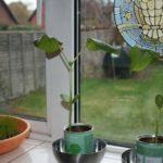 Pflanzen züchten / Grow Plants